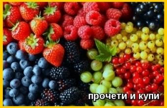 Диворастящи горски плодове