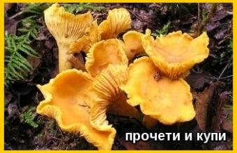 Мushrooms