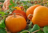 The wonderful properties of Pumpkin and its seeds