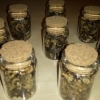 Dried truffles - Macrosporum vitt
