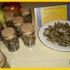 Сушеные трюфели- Macrosporum vitt